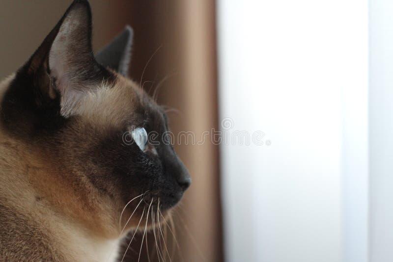 Achter de blauwe ogen stock fotografie