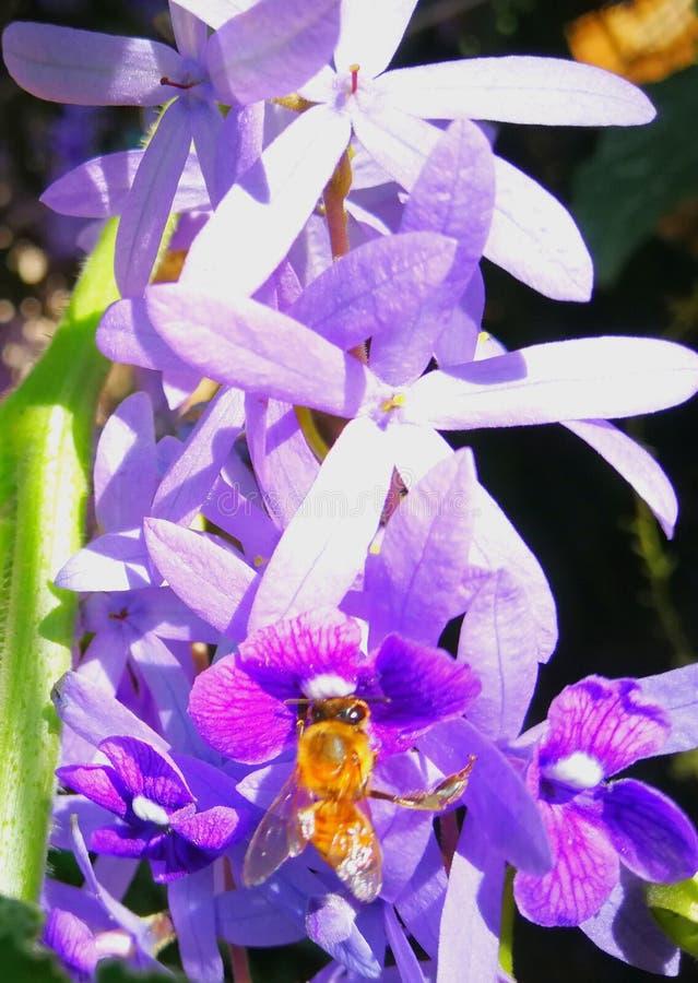 Achter de honing Het Bijenleven royalty-vrije stock afbeelding