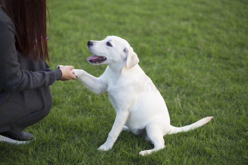 Achter mening van een puppyhond op een grijze achtergrond stock foto's