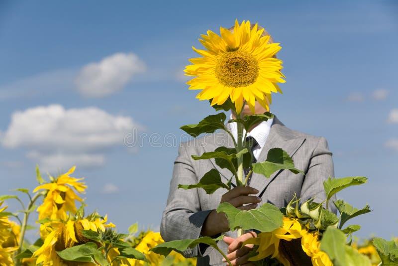 Achter zonnebloem stock afbeelding