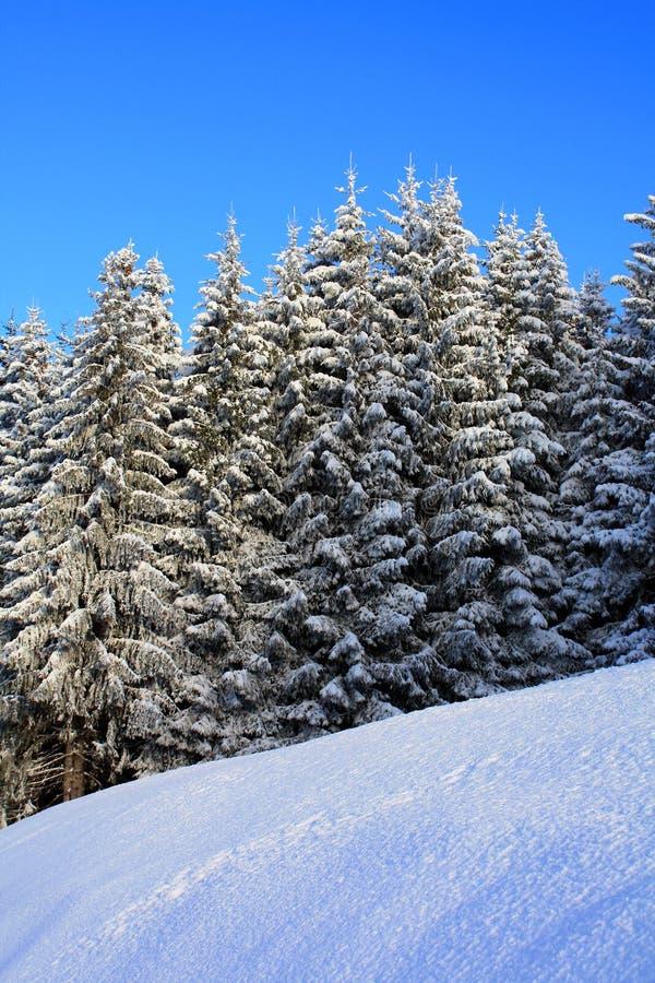 Achtergrond 03 van de winter royalty-vrije stock fotografie