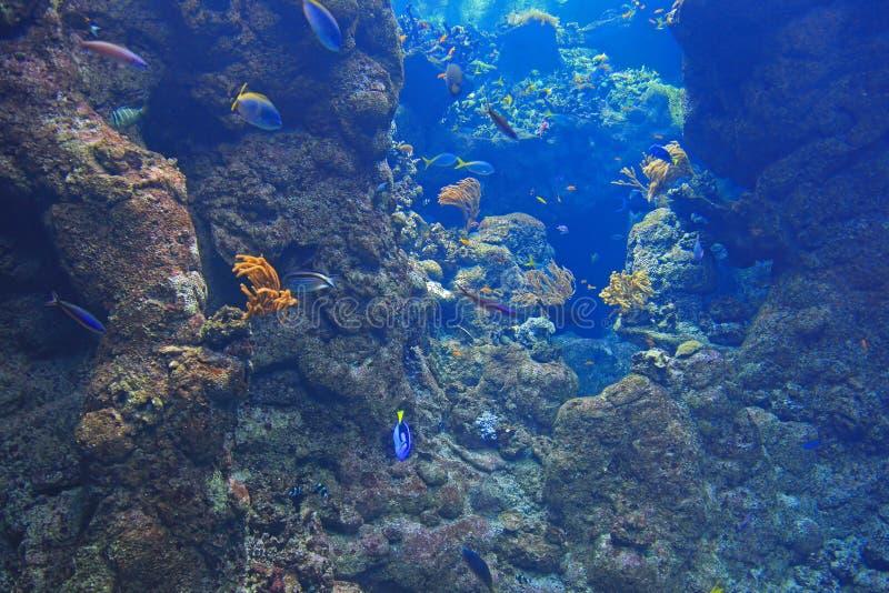 Achtergrond Beeld van Onderzees royalty-vrije stock afbeeldingen