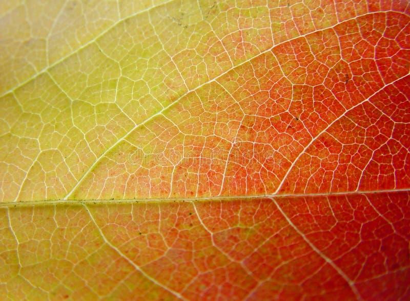 Achtergrond Blad In Groen, Geel En Rood Royalty-vrije Stock Foto