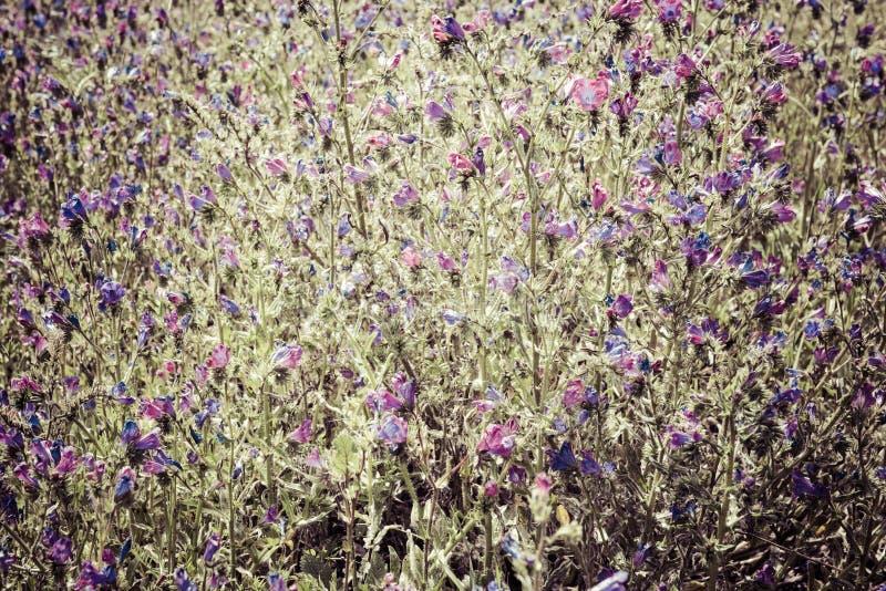 Achtergrond blauwe wilde bloemenscène royalty-vrije stock foto