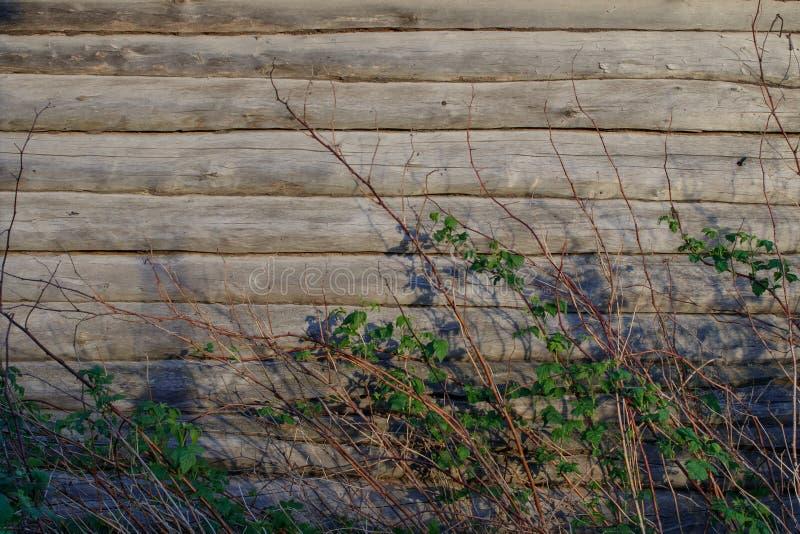 Achtergrond De muur van een oud logboekhuis De framboos ringt Droge takjes en vertakt zich met bladeren stock foto