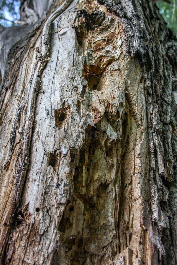 Achtergrond De oude boomboomstam draaide schorskevers stock foto