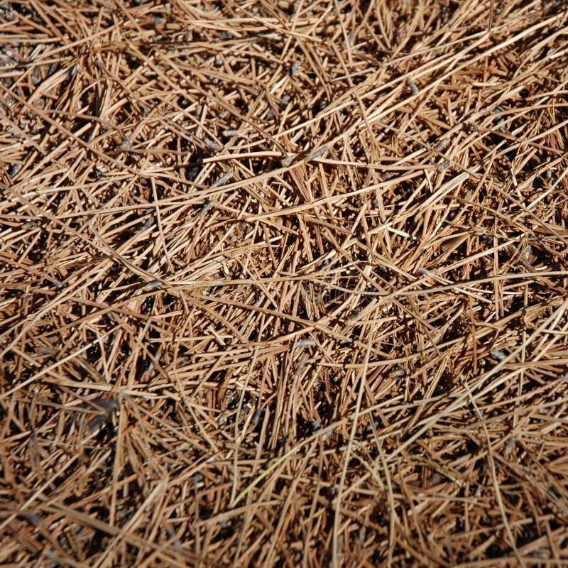 Achtergrond - Droog Gras royalty-vrije stock foto
