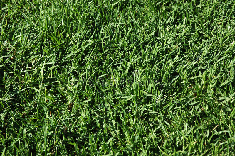 Achtergrond - Gras royalty-vrije stock afbeelding