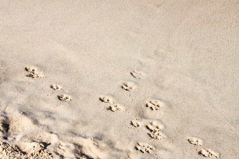 Achtergrond - hondvoetafdrukken in het zand langs een diagonale hoek met hoger hoek enkel zand - ruimte voor tekst royalty-vrije stock afbeelding