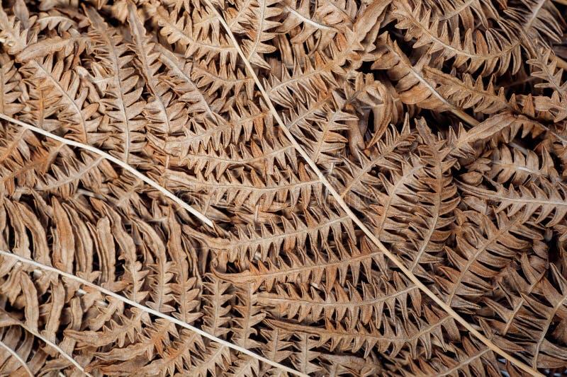 Achtergrond met abstracte patronen van oude droge bladeren Textuur van natuurlijk blad in bos royalty-vrije stock afbeeldingen