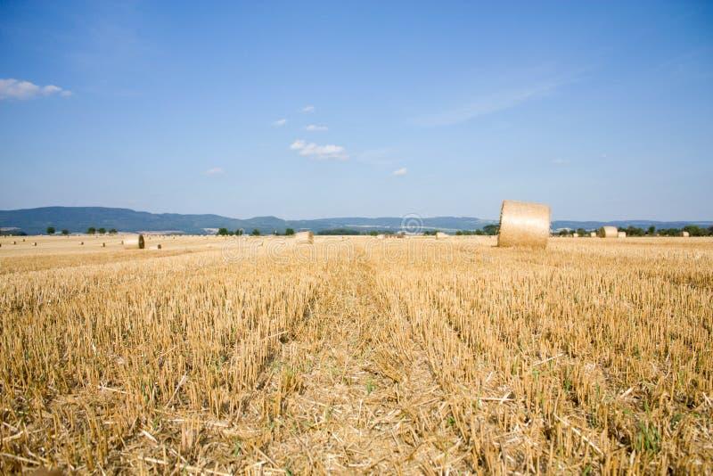 Achtergrond met cornfield stock afbeelding