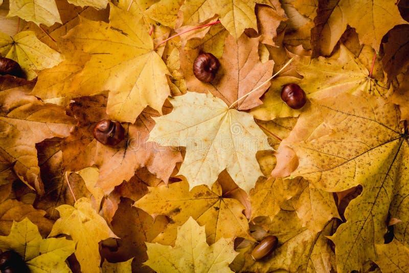 Achtergrond met de herfstbladeren en kastanjes stock foto