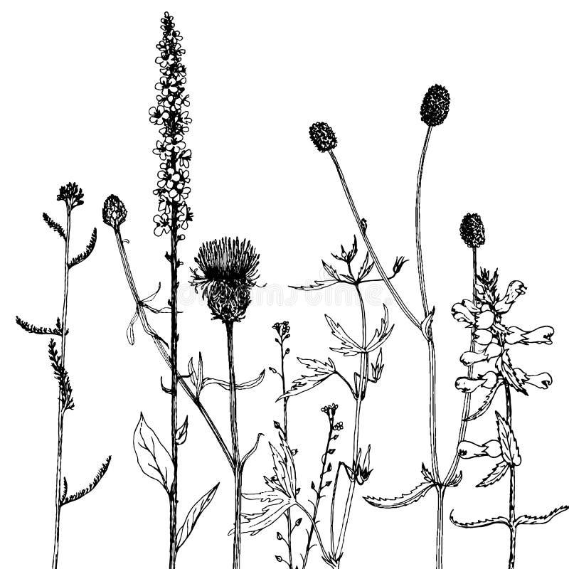 Achtergrond met de kruiden en de bloemen van de inkttekening stock illustratie