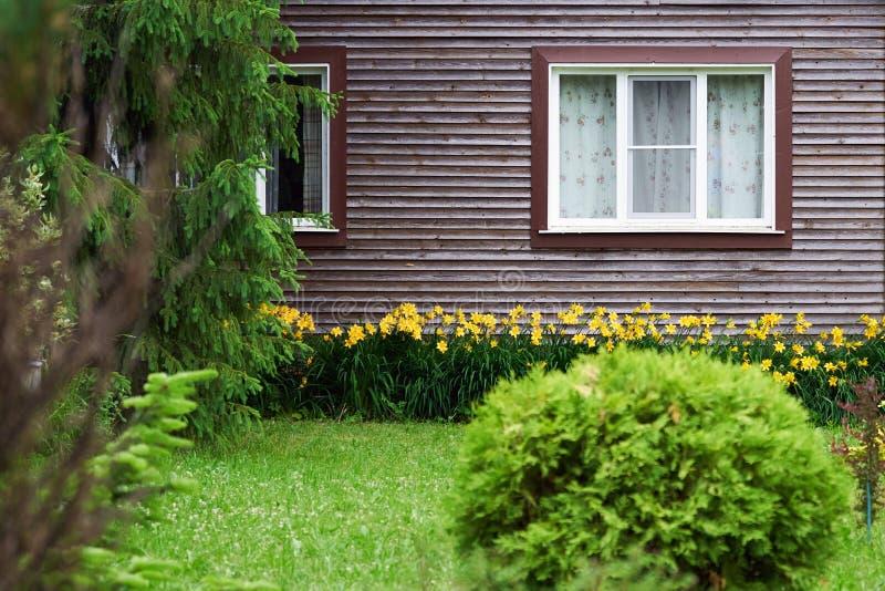 Achtergrond met een de zomertuin met een janiperstruik en daylilies voor het buitenhuis royalty-vrije stock afbeelding