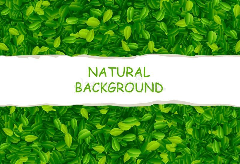 Achtergrond met groene bladeren royalty-vrije illustratie