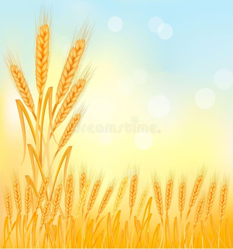 Achtergrond met rijpe gele tarweoren vector illustratie