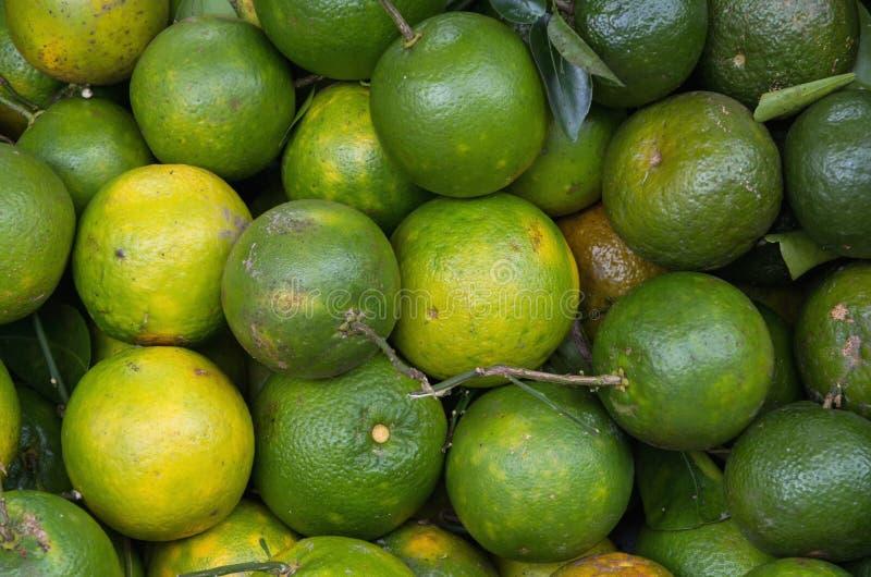 Achtergrond met sinaasappelenfruit dat in deel 5 wordt gekweekt van keerkringen royalty-vrije stock afbeelding