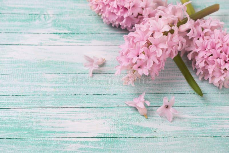 Achtergrond met verse hyacintenbloemen royalty-vrije stock afbeeldingen