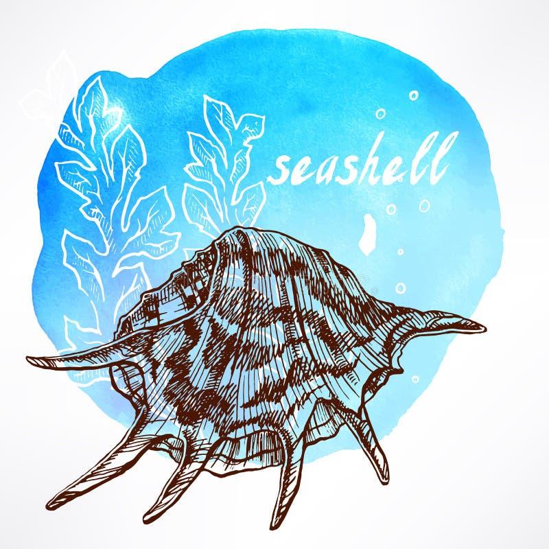 Achtergrond met zeewier en shell - 3 vector illustratie