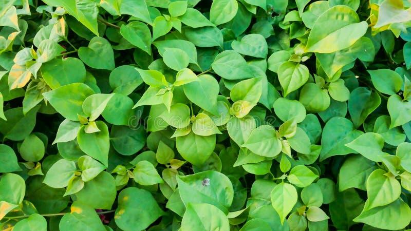 Achtergrond milieudag Sluiting van de groene bladplant Clean nature Biologisch patroon van verse tuinen Bladeren tropische wand royalty-vrije stock foto