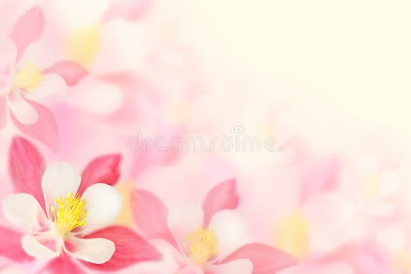 Achtergrond - roze bloemen royalty-vrije stock afbeeldingen
