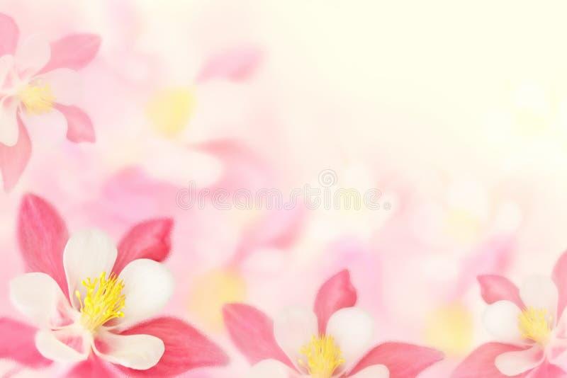 Achtergrond - roze bloemen royalty-vrije stock foto