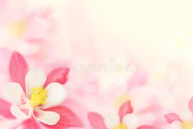 Achtergrond - roze bloemen stock fotografie