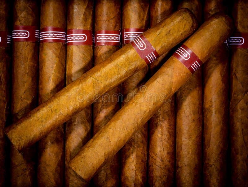 Achtergrond sigaren in humidor royalty-vrije stock foto's