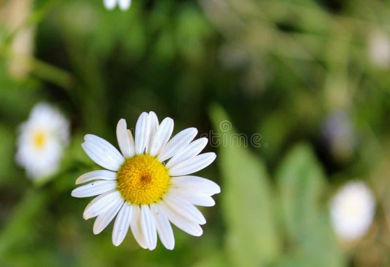 Achtergrond solo-bloem stock fotografie