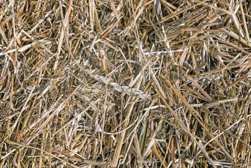 Achtergrond: stro, rogge en tarwe stock afbeeldingen