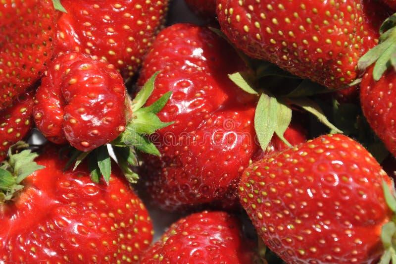 Achtergrond of textuur met verse organische aardbeien van tuin royalty-vrije stock foto