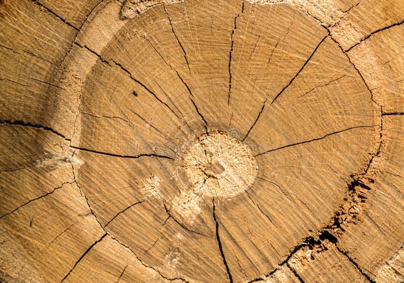 Achtergrond, textuur, plak van boomboomstam stock fotografie