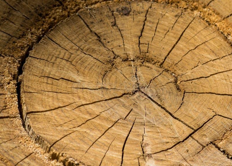 Achtergrond, textuur, plak van boomboomstam stock afbeelding