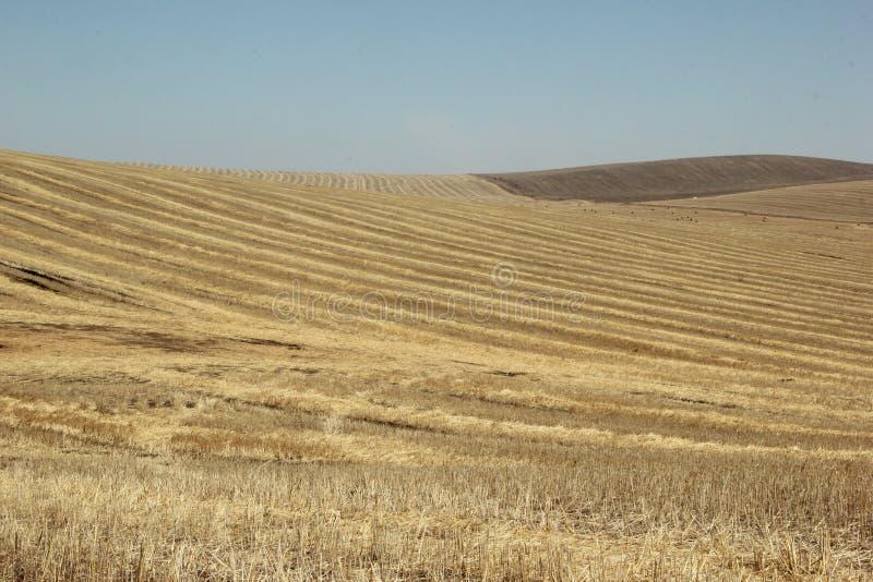 Achtergrond textuur Stro op een hellend gebied in de lente stock afbeelding