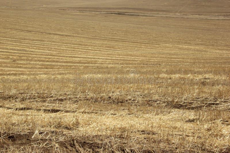 Achtergrond textuur Stro op een hellend gebied in de lente royalty-vrije stock foto