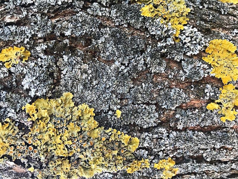 Achtergrond textuur van boomschors Hout, schors, texturen royalty-vrije stock fotografie