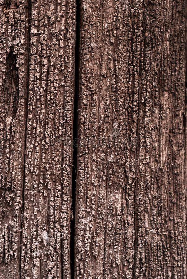 Achtergrond - textuur van een rotte boom stock fotografie