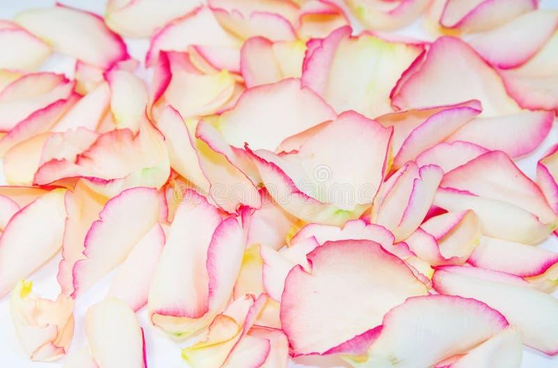 Achtergrond textuur van roze bloemblaadjes stock afbeeldingen