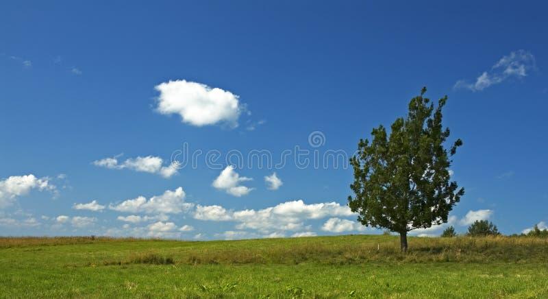 Achtergrond van blauwe hemel en boom royalty-vrije stock foto