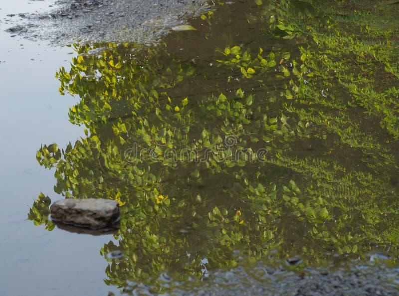 Achtergrond van bomen die op waterspiegel worden weerspiegeld stock foto's