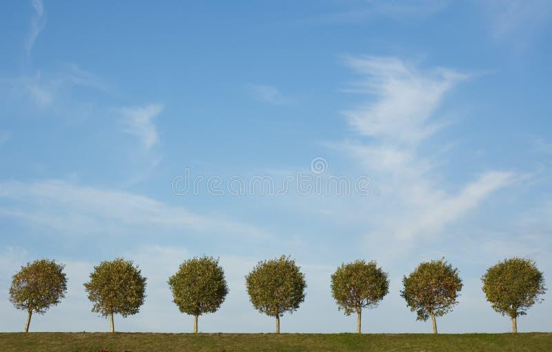 Achtergrond van boomsteeg en blauwe hemel royalty-vrije stock foto
