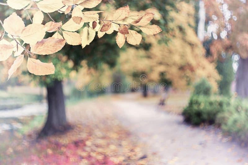 Achtergrond van de aard de uitstekende herfst stock fotografie