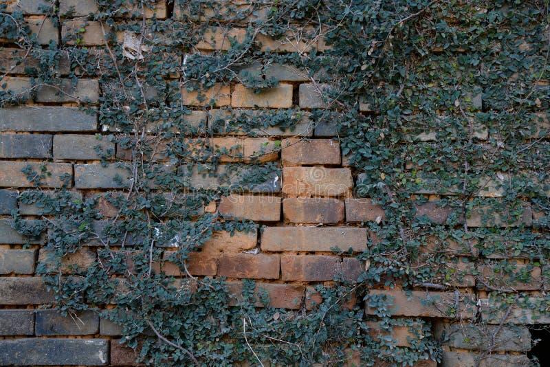 Achtergrond van de Arabesque de rode bakstenen muur royalty-vrije stock fotografie