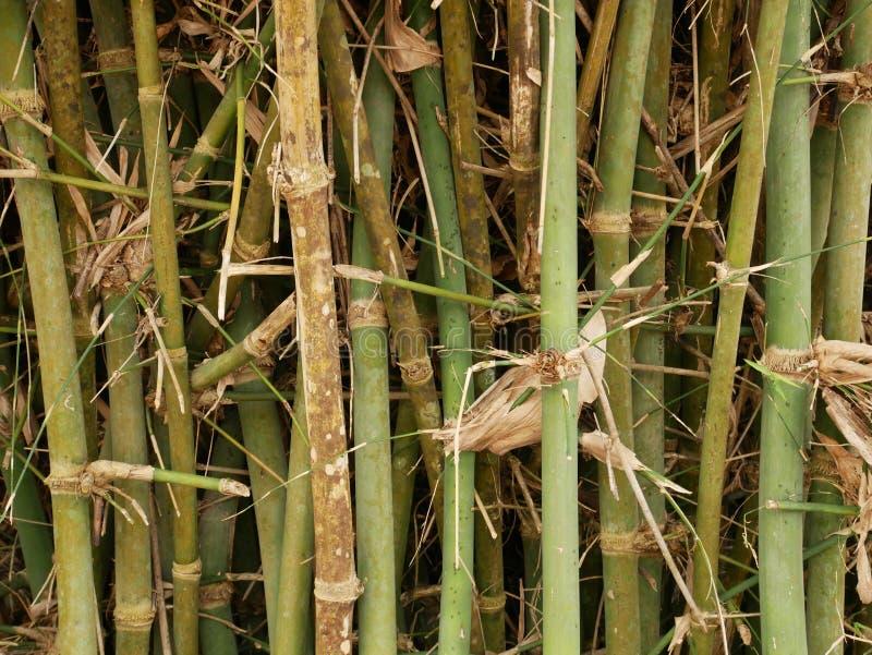 Achtergrond van de bamboe de bosaard, de textuur van de close-upinstallatie royalty-vrije stock fotografie
