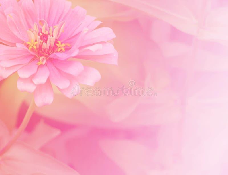 Achtergrond 6 van de bloem royalty-vrije stock afbeeldingen