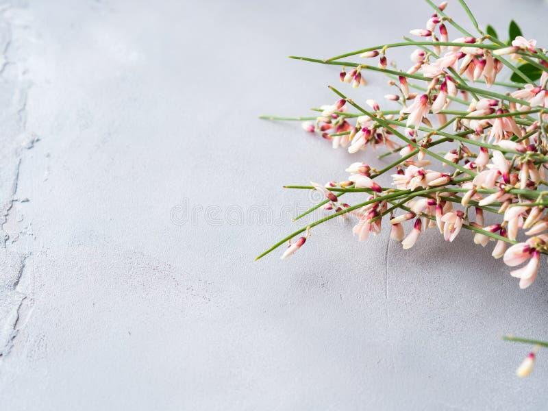 Achtergrond van de de bezem de bloemen minimale pastelkleur van de lentepasen stock foto