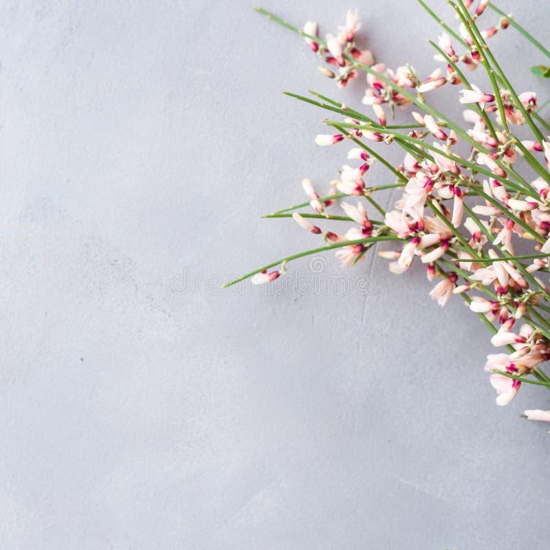 Achtergrond van de de bezem de bloemen minimale pastelkleur van de lentepasen royalty-vrije stock foto