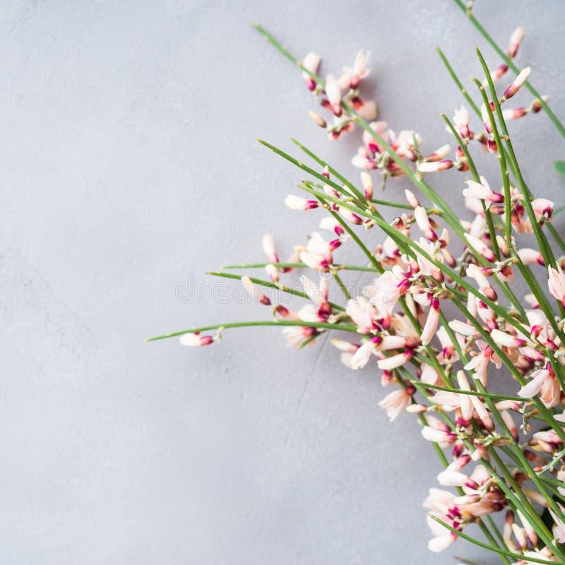 Achtergrond van de de bezem de bloemen minimale pastelkleur van de lentepasen stock afbeeldingen