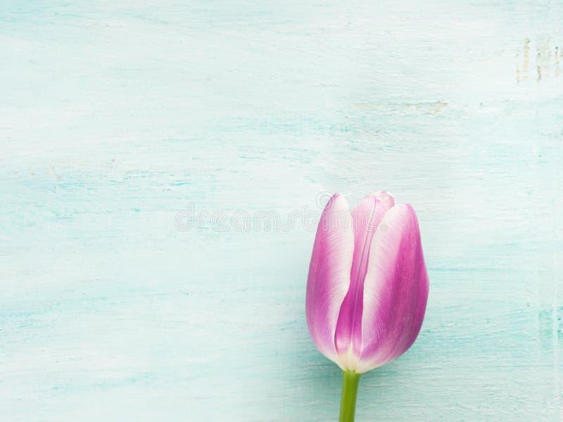 Achtergrond van de de tulpen de bloemen minimale pastelkleur van de lentepasen stock fotografie