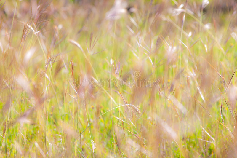 Achtergrond van de de zomer de abstracte aard met gras in de weide stock afbeeldingen